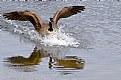Picture Title - Splash Landing