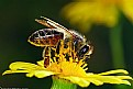 Picture Title - Spring Bee