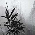 Picture Title - 1st jan.2007 :fog