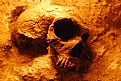 Picture Title - Neanderthal Skull (prehistoric man)
