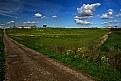 Picture Title - classic landscape #1