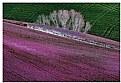 Picture Title - Carpet