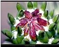 Picture Title - Cactus Bloom