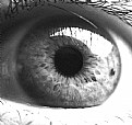 Picture Title - eye