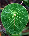 Picture Title - ..:: Leaf ::..