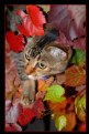 Picture Title - Autumn Camouflage