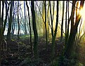 Picture Title - Morning in the forest...