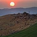 Picture Title - tramonto al pascolo