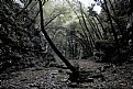 Picture Title - fangorn forest