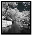 Picture Title - Fossil Creek Blk wht IR
