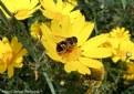 Picture Title - Springtime