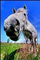 Picture Title - White Horse