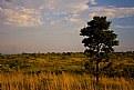 Picture Title - SA Safari 3