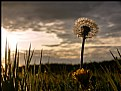 Picture Title - Meadow at the sunset...