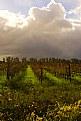 Picture Title - SA wine