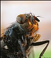 Picture Title - Fly
