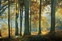 Picture Title - Dago Forest