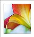 Picture Title - Garden Beauty