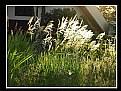 Picture Title - White