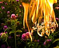Picture Title - Fire Flower