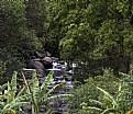 Picture Title - Ioa Valley Park, Maui