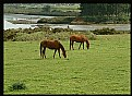 Picture Title - Grazing