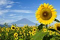 Picture Title - Sunflower Mountain