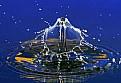 Picture Title - Night Splash