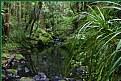 Picture Title - Whangarei Bush
