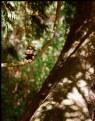 Picture Title - Tarzan Gene-bear...