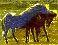 Picture Title - Horses