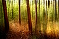 Picture Title - Forest...