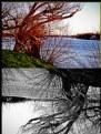 Picture Title - Colores