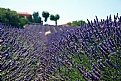 Picture Title - Quintessential Provence