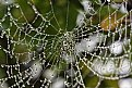 Picture Title - spider pearls