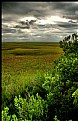 Picture Title - Heavens Meadow