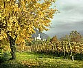 Picture Title - Autunno in Franciacorta