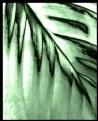 Picture Title - Emerald