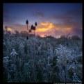 Daybreak at Salt Fork Lake