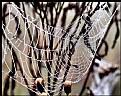 Picture Title - Wet Web