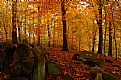 Picture Title - Autumnal colors in Rock Creek Park, Maryland