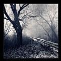 Picture Title - Rail