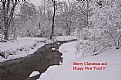 Picture Title - Merry Christmas and Happy New Year 2008!