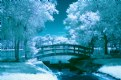Picture Title - Secluded Bridge