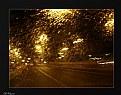 Picture Title - Golden rain