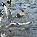Picture Title - Gulls