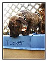 Picture Title - Tucker