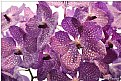 Picture Title - orchids