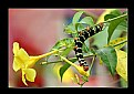 Picture Title - Caterpillar