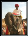 Picture Title - The Elephant and the Mahoot (The Elephant Driver)